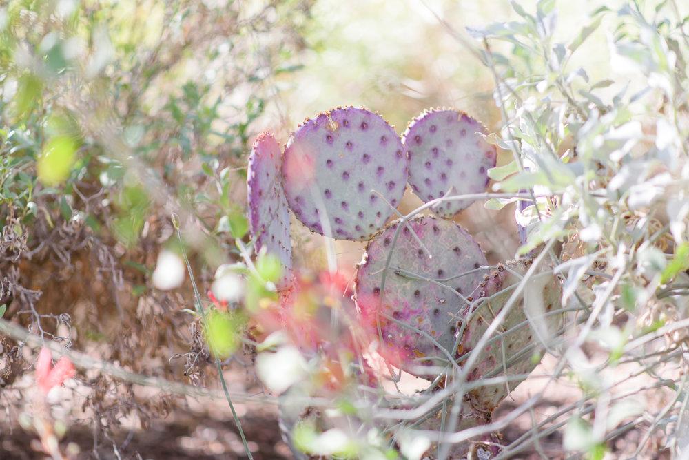 cactus phoenix arizona kentucky photographer january june photography