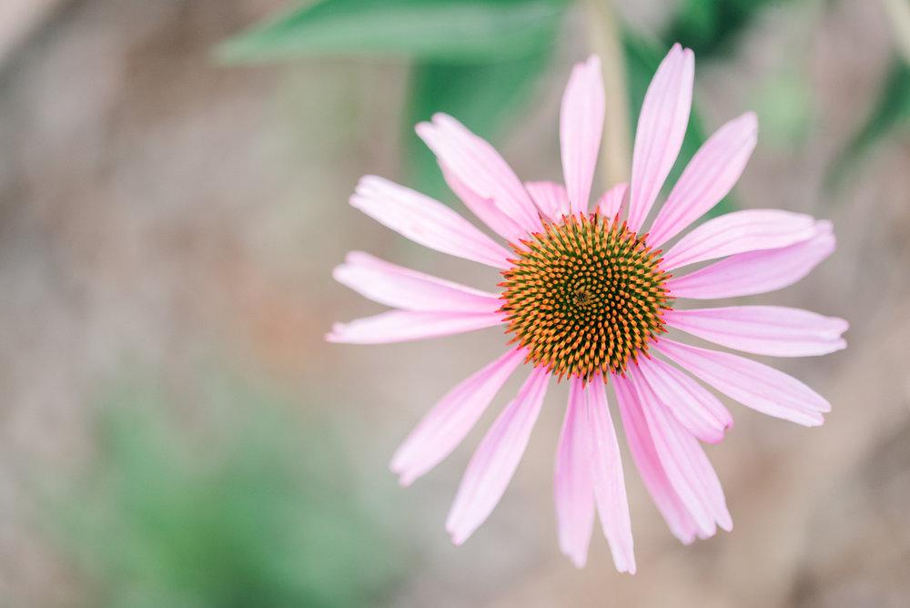 flowerjanuaryjunephotography.jpg