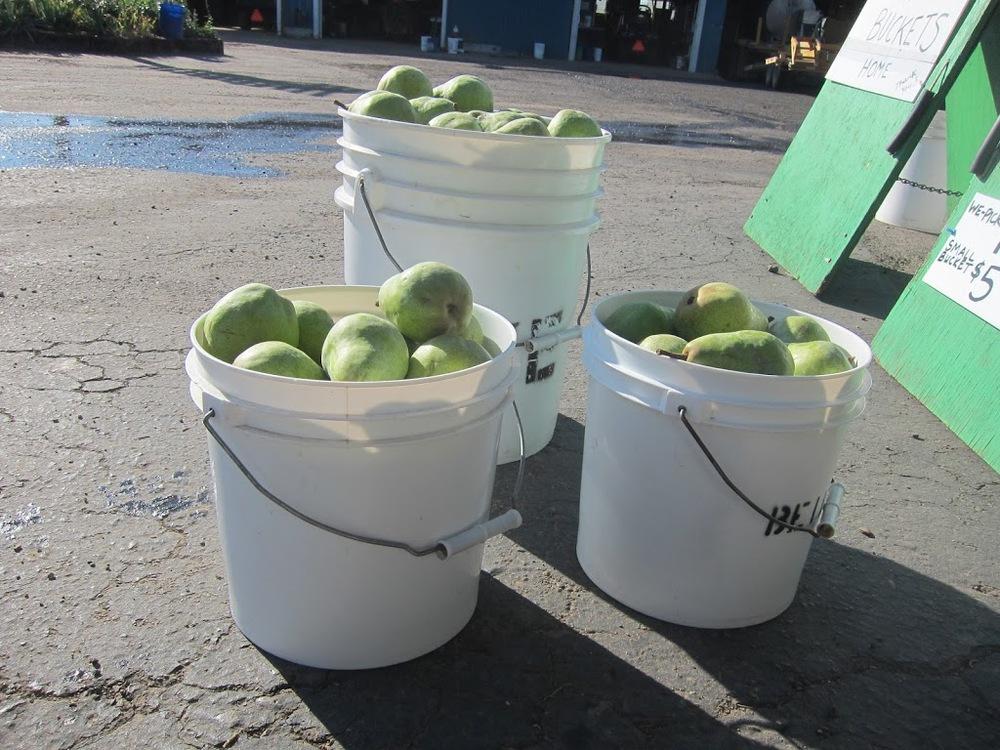 pears-8-31-12-004
