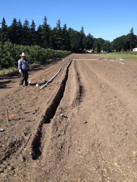 Noe apple irrigation