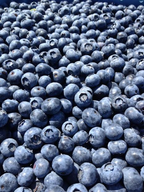 plain blueberries