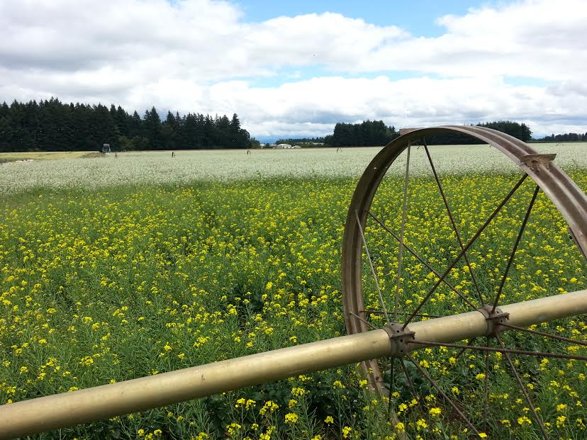 radish wheelline