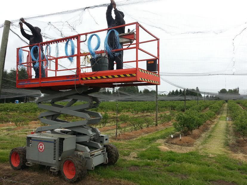 putting up net, cart