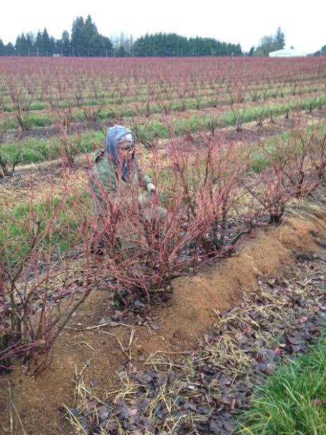 Lazaro pruning