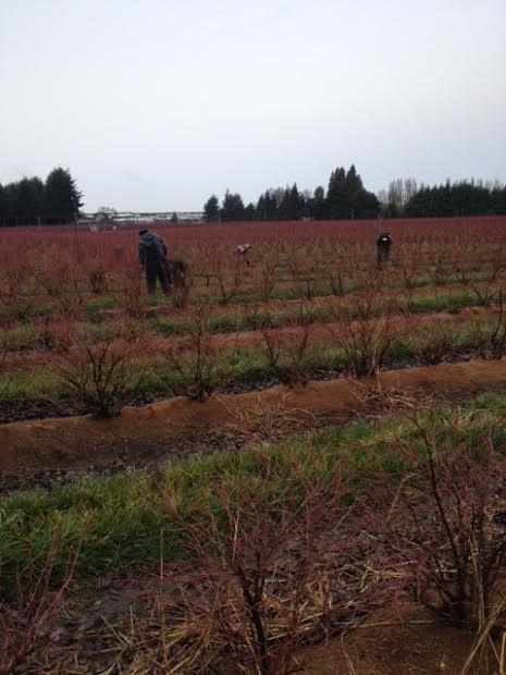 pruning more