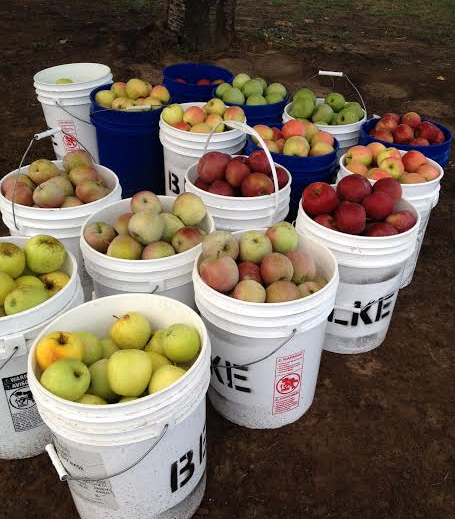 Golden Delicious, Fuji, Rome, Pink Lady, Granny Smith, Braeburn available.