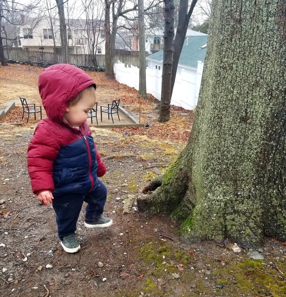 Bodhi in the rain, playing with the rocks at the root of the tree