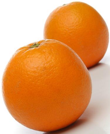 orangesSmall.jpg