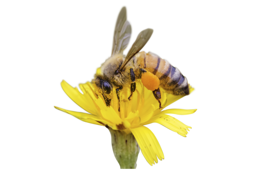 BEES & APITHERAPY