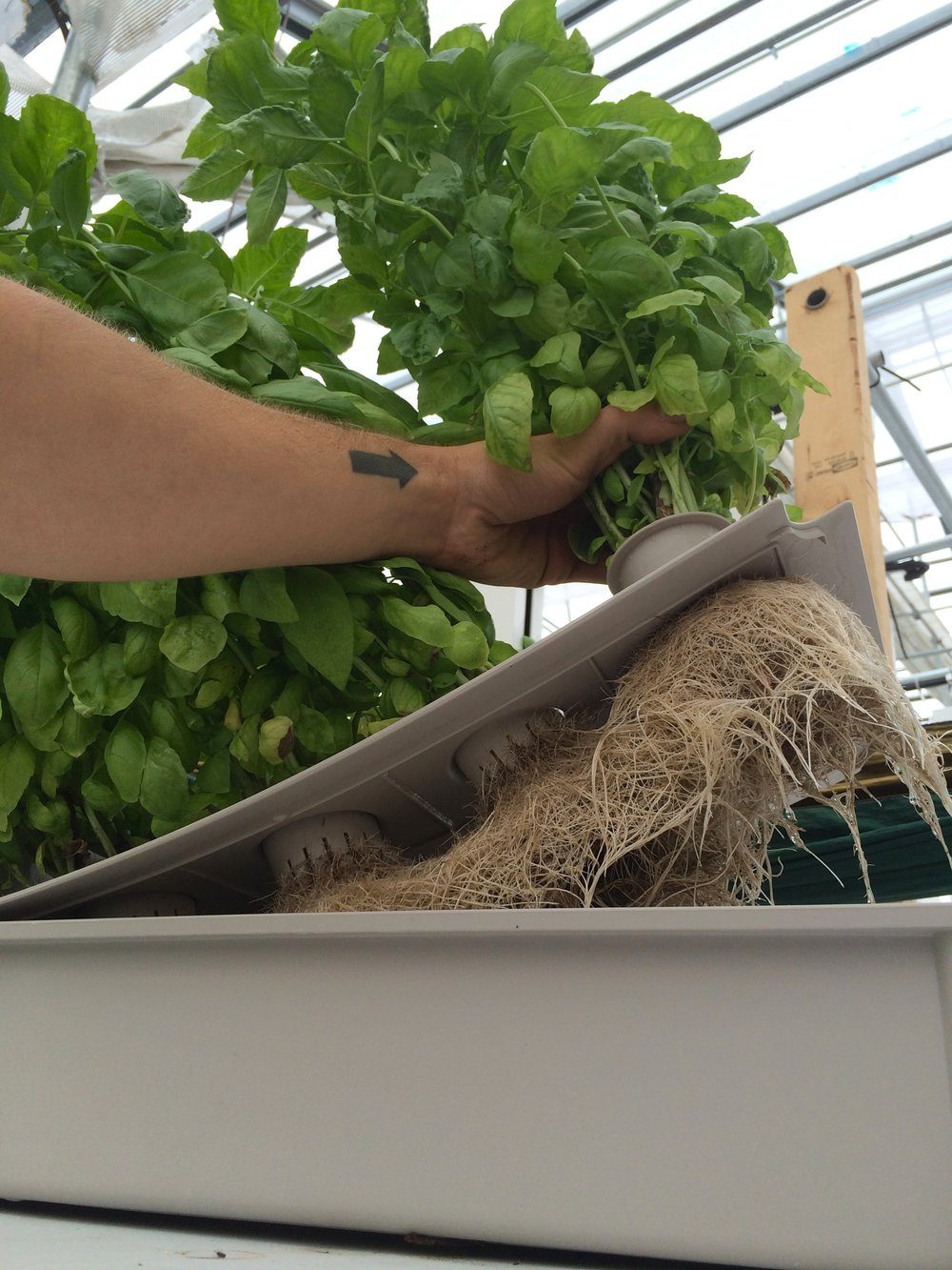 easy low maintenance hydroponics the kratky method u2014 farmer tyler