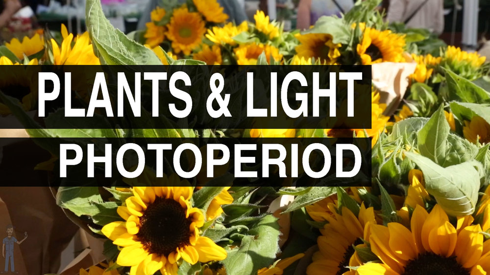 Photoperiod