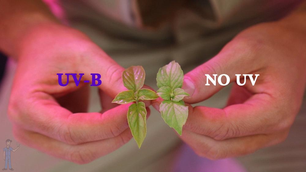 3. uv-b and no uv side by side.jpg