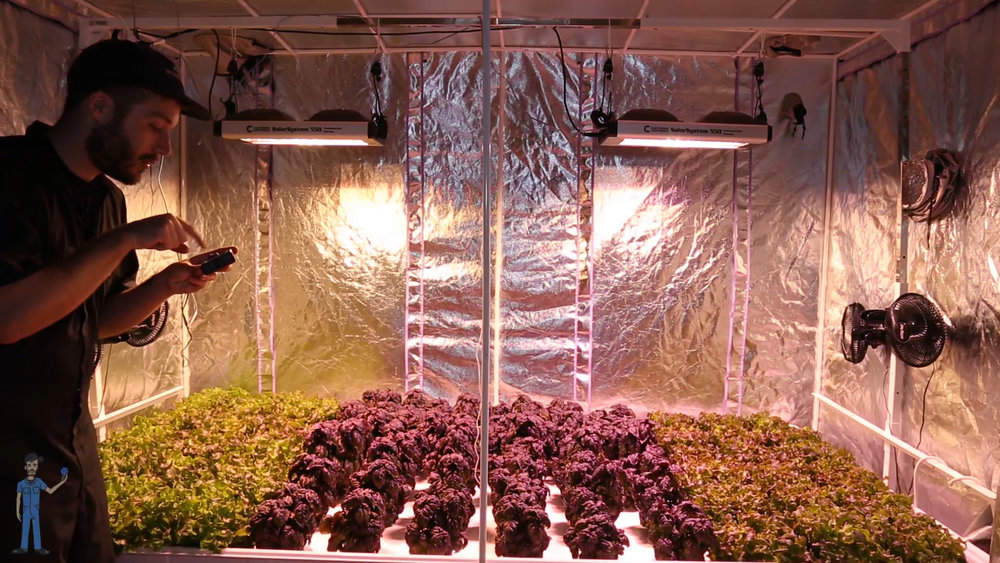Setting the grow lights to view mode (white light) to see the results of the blue/red ratio trial.