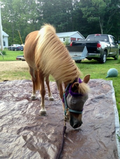 Rescu horse-PiperTrail.JPG