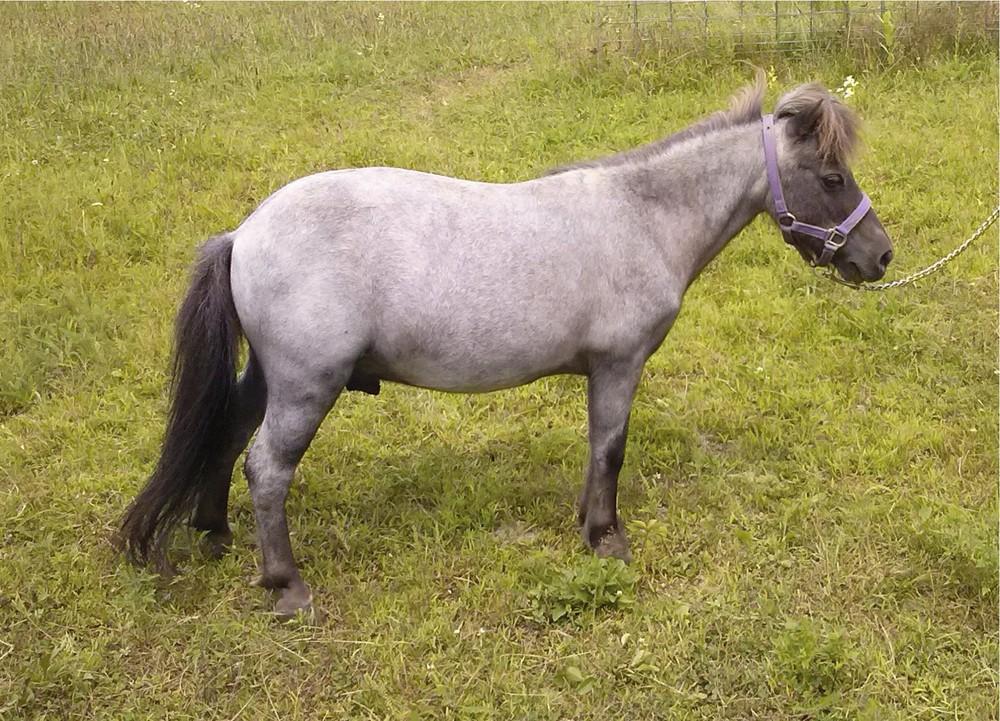 Rescue HorseRH-Thunder.jpg