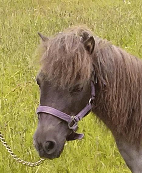 Rescue HorseRH-ThunderHd.jpg