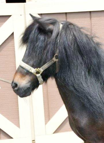 Rescue+HorseRH-CeeCeeHd.jpg