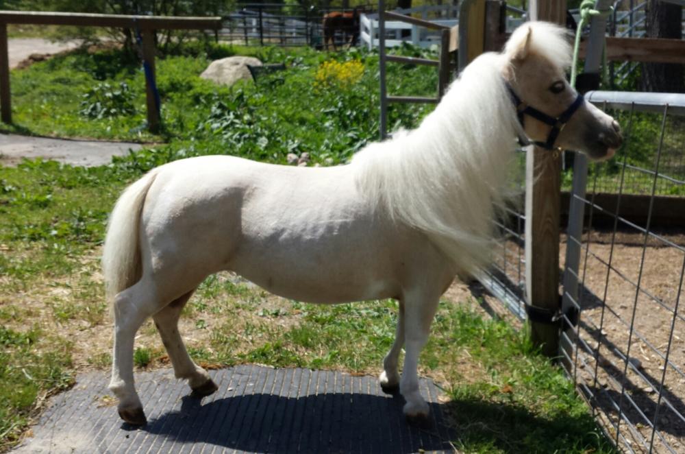 Rescue+HorseRH-Sassy2.jpg