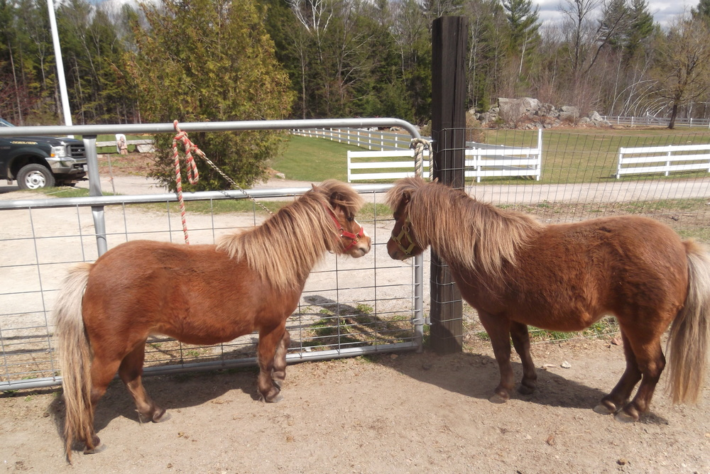 Rescue horseRH-BellaLeah.JPG