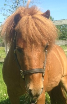 Rescue horse-FritzHd.JPG