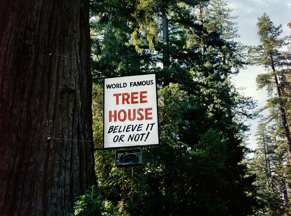 Believe it or Not!,   Mendicino County, CA , 2011, Pigment print