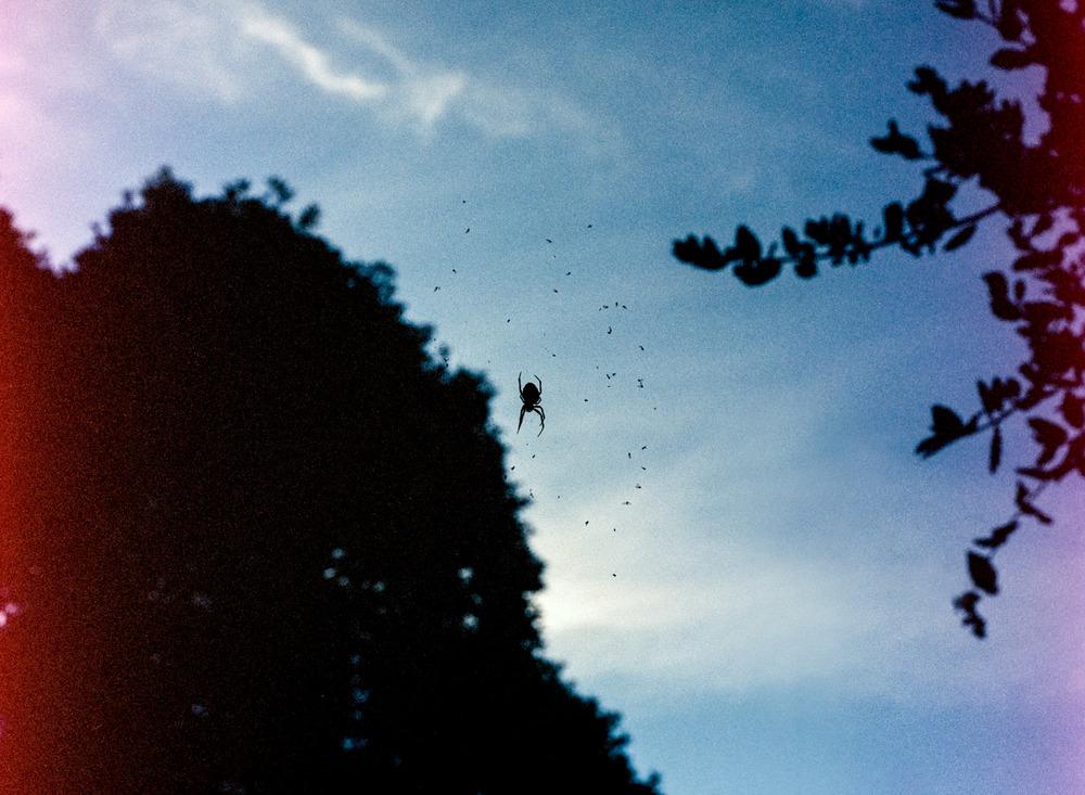 Spider, Tiburon, CA ,2011, Pigment print