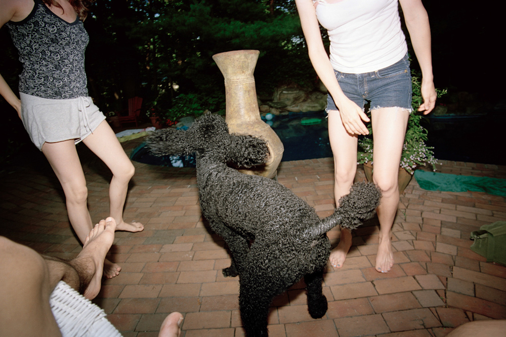 Poodle, New Jersey , 2008, Pigment print