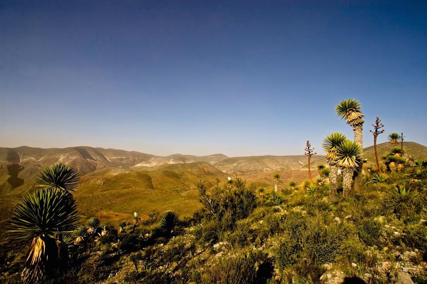 The sacred ceremony grounds of the Huichol indigenous people. Cerro Quemado, México.