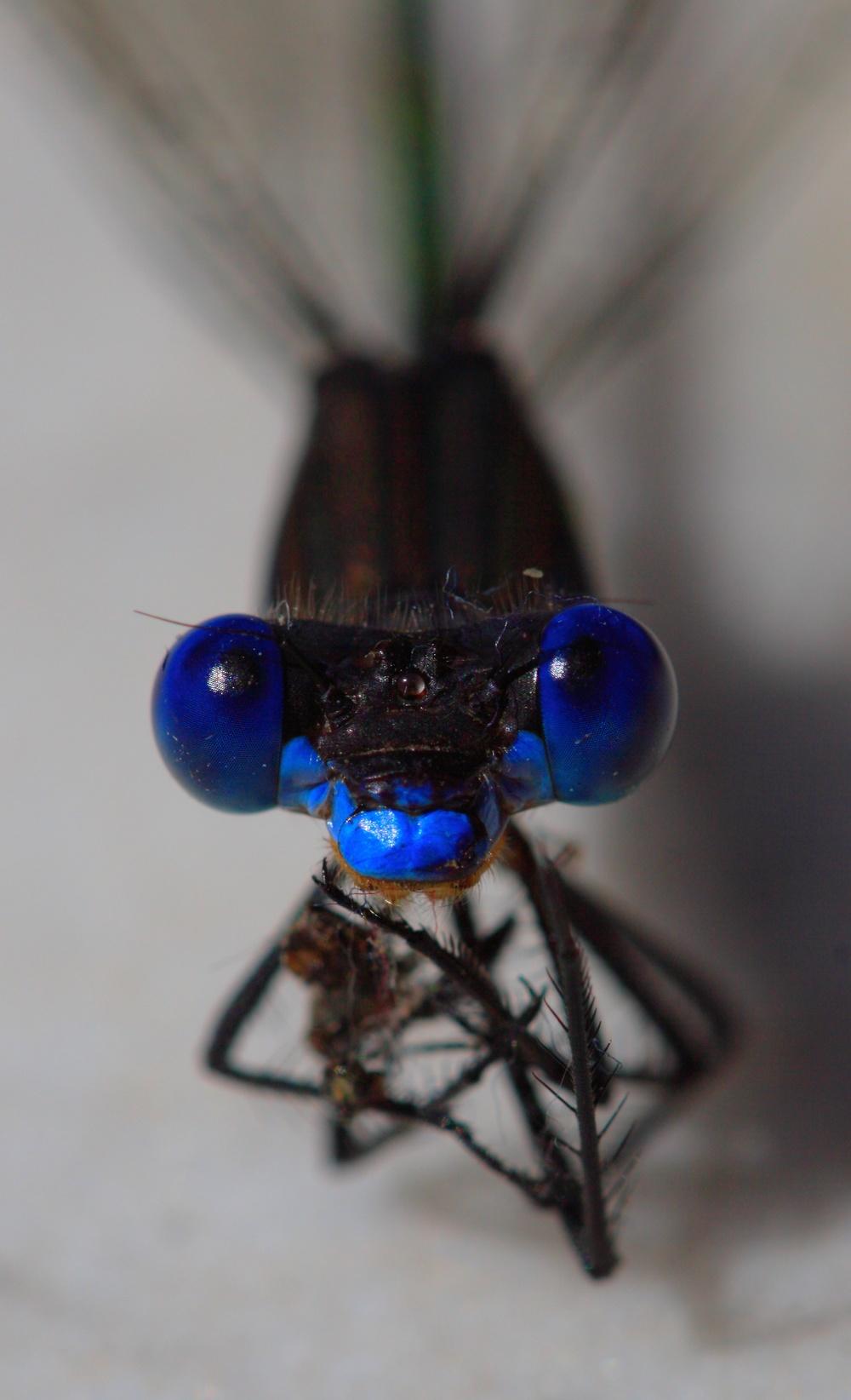 Pretty blue eyes.