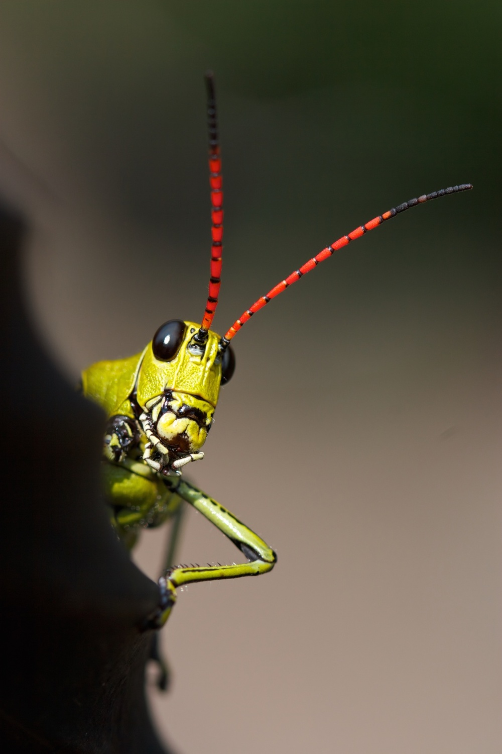 What's up, man … apart from my antennae?