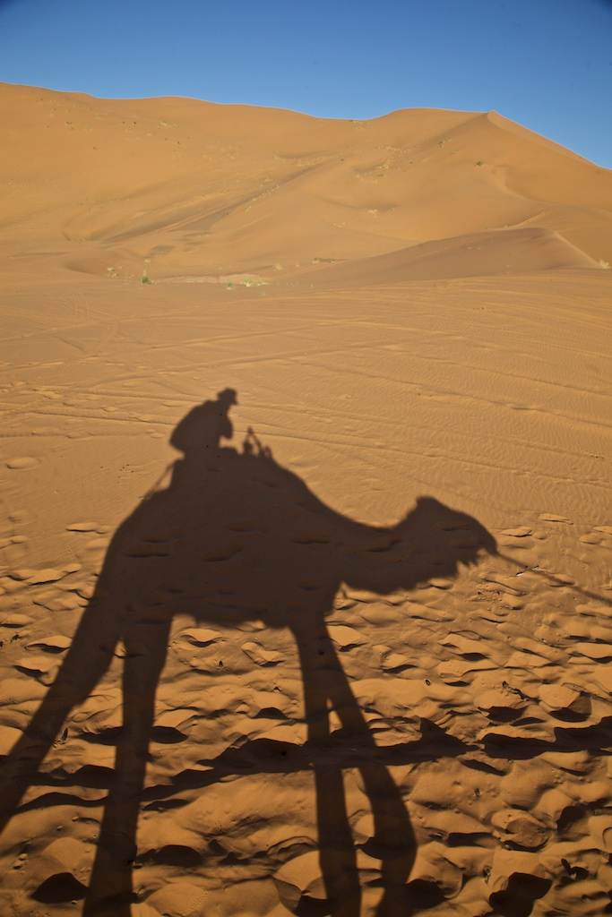 Early desert morning camel experience.
