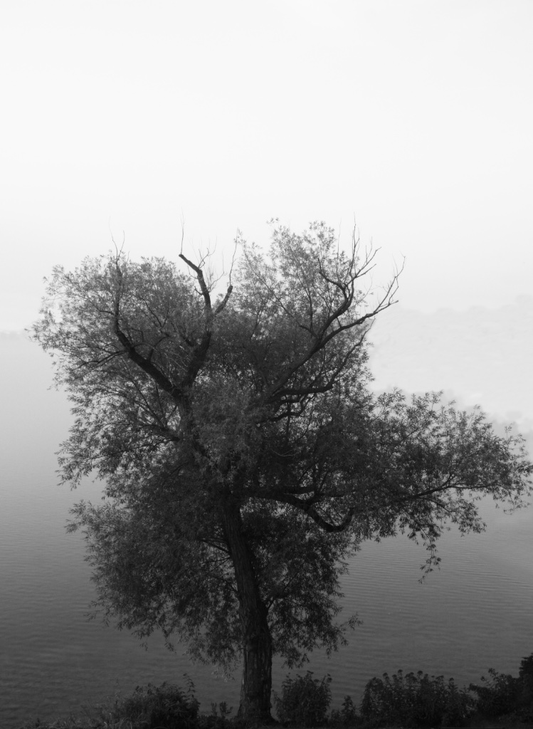 The tree by the lake from where the sailors left to never return.