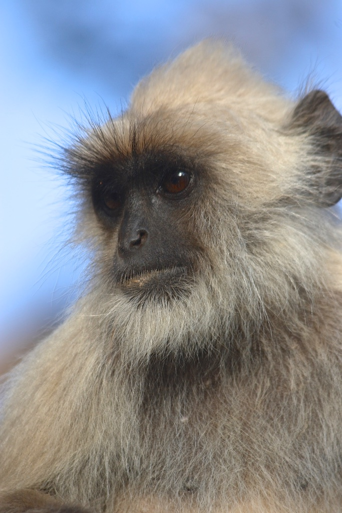 A monkey with a mischievous glint in his eye.