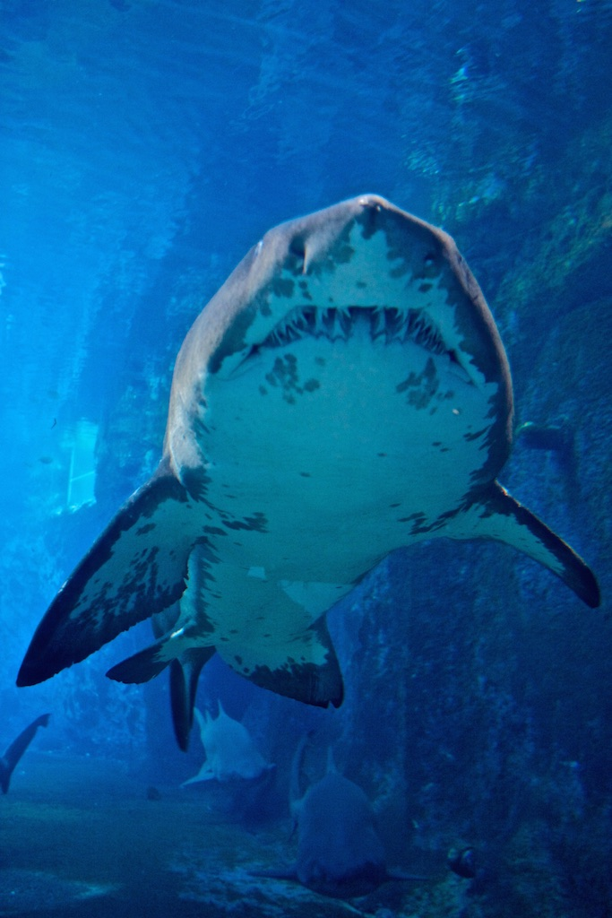 A shark with a toothy smile.