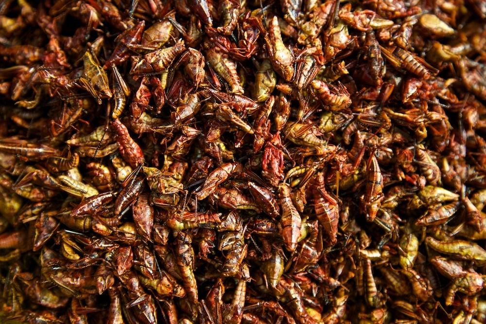 Mexican grasshopper delicacy.