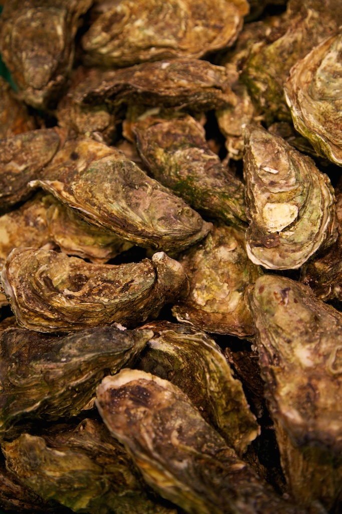 Proud oysters.