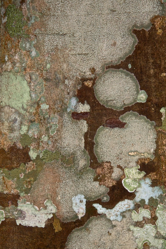 A bird's eye view of a distant, camouflaged world.