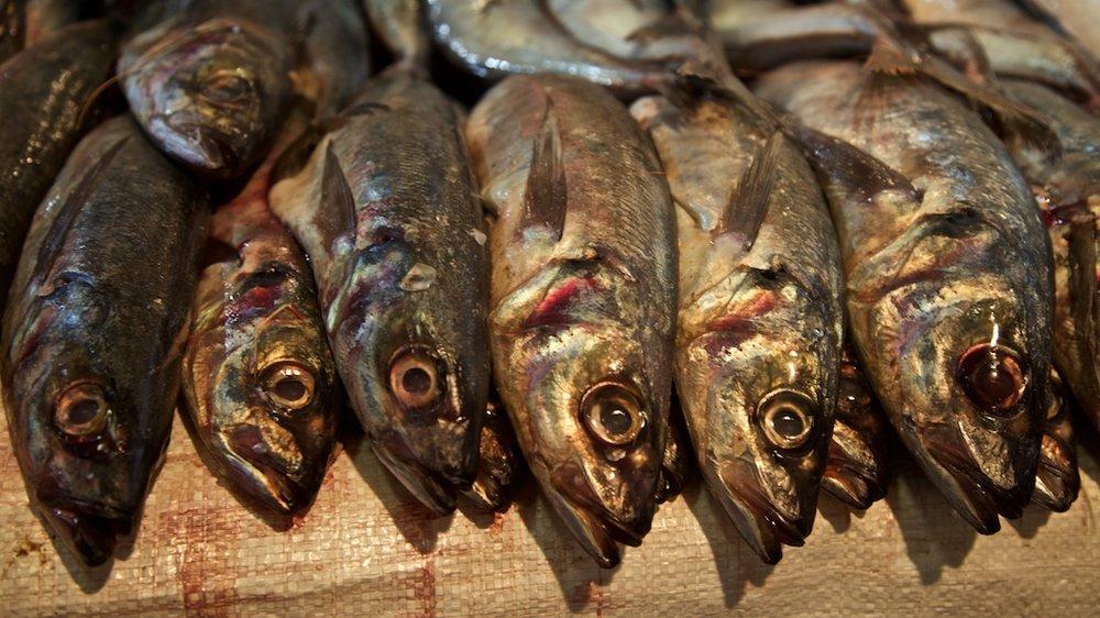 - Still Life: Fishy line-up.