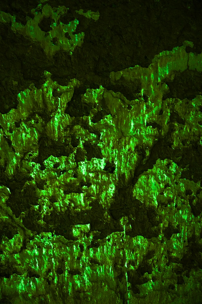 The petrified emerald forest, from which no one who has found it has ever returned.