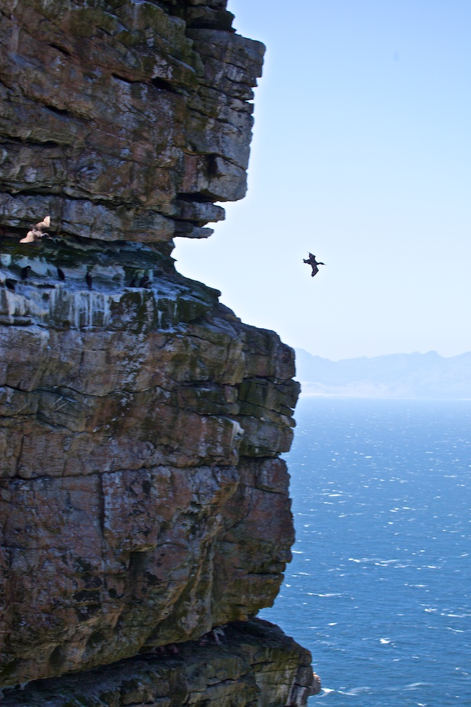 Flying against the fierce winds surrounding the Cape of Good Hope, South Africa