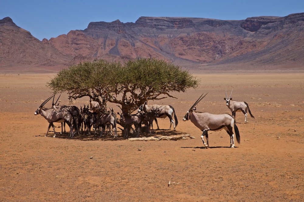 A Namib Desert waterhole