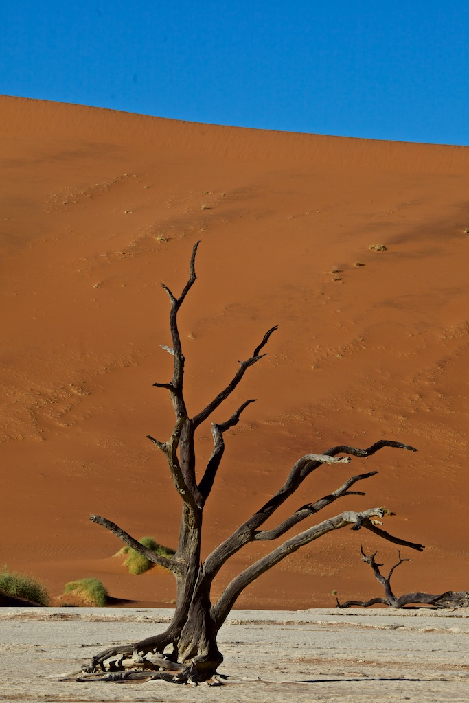 Dead acacia trees in Deadvlei, Namibia, the only remnants after a river in the region dried up 500 years ago