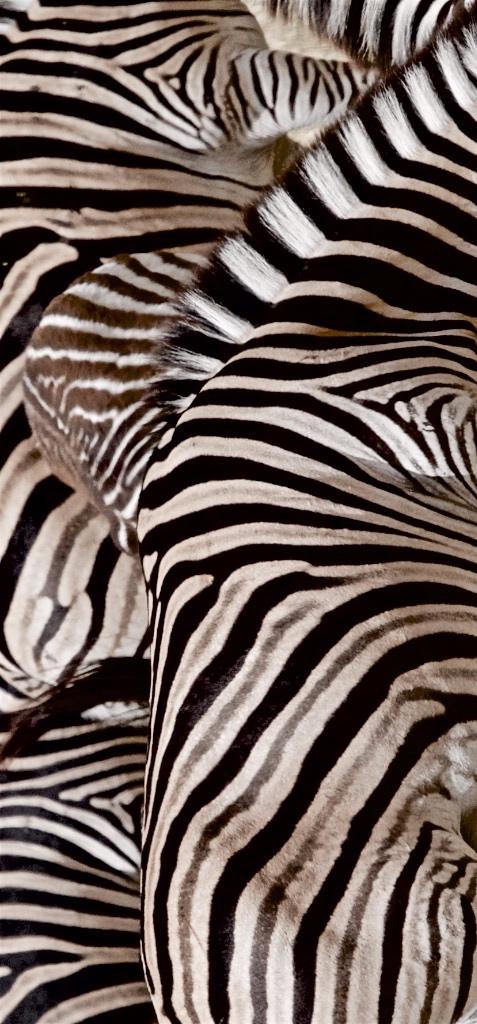Zebra confusion.