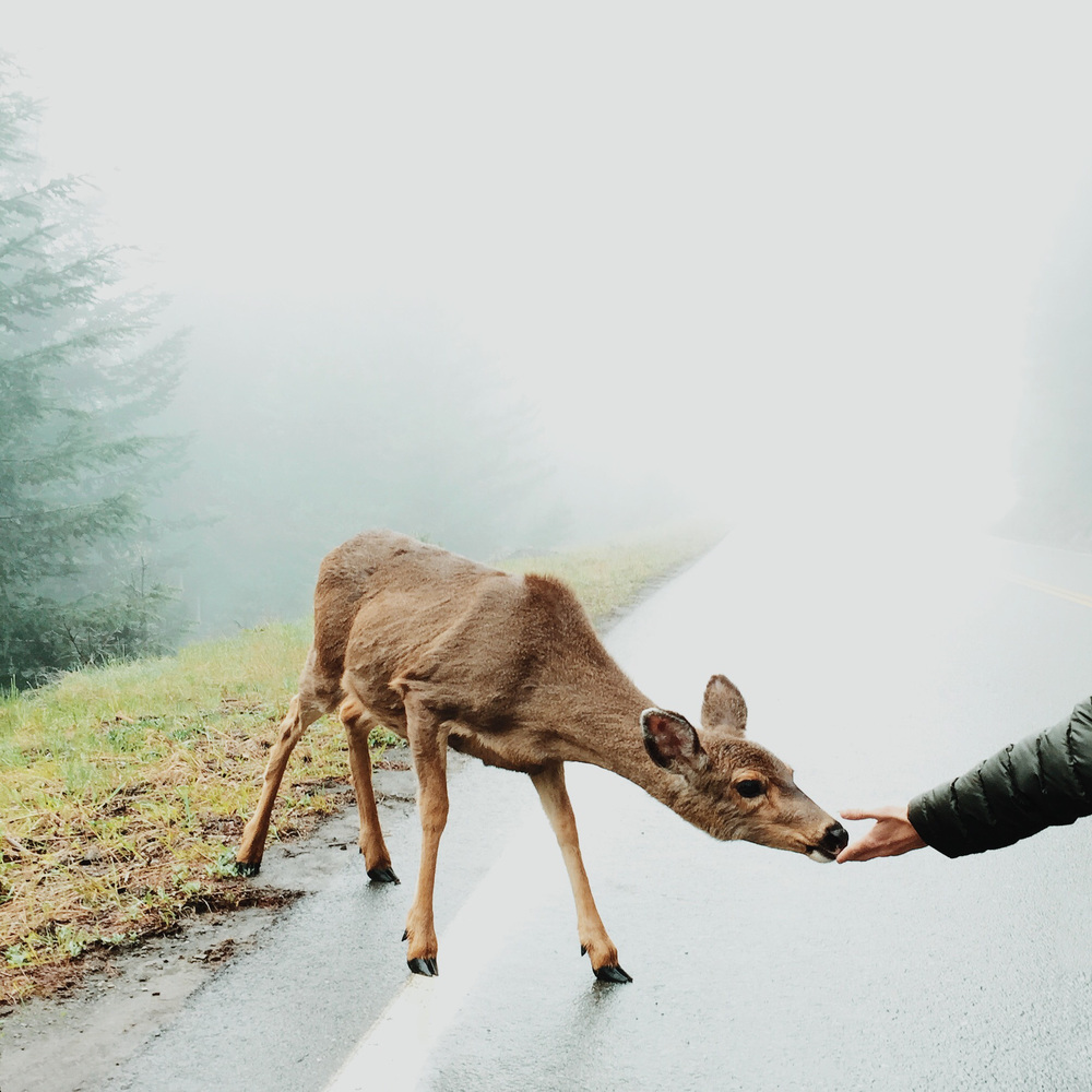 Outdoor adventure portrait of a deer | Katch Silva