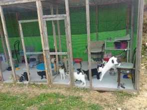 Image 2 - Standard Cattery Enclosure