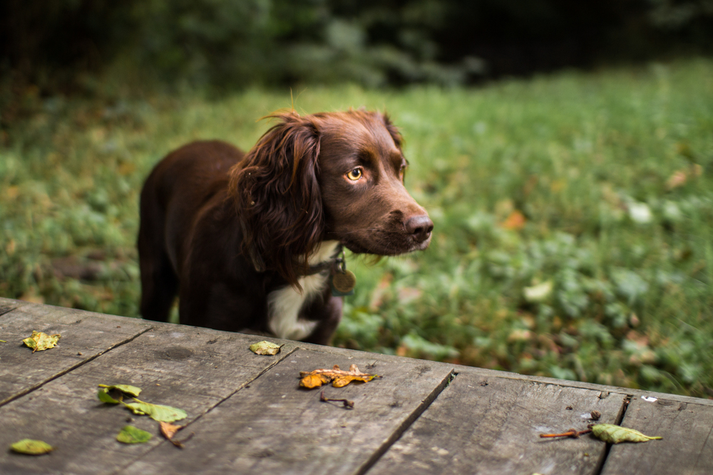Bristol Pet Photography