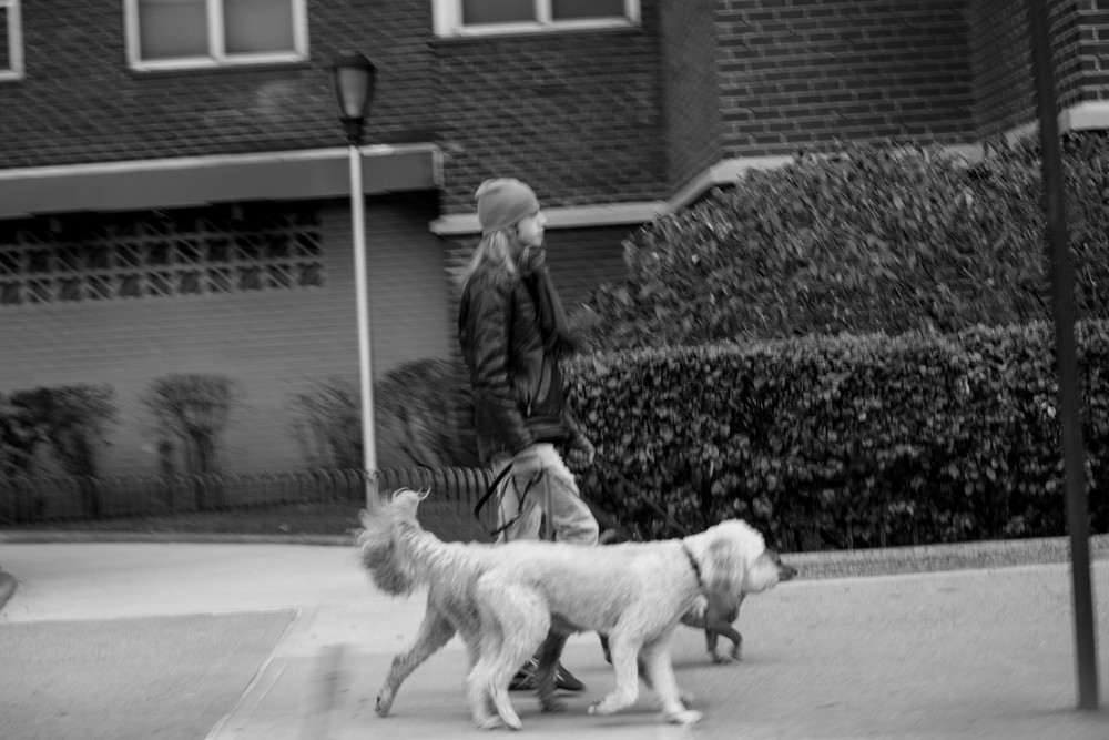 24 - Dog walking 1.21.15.jpg