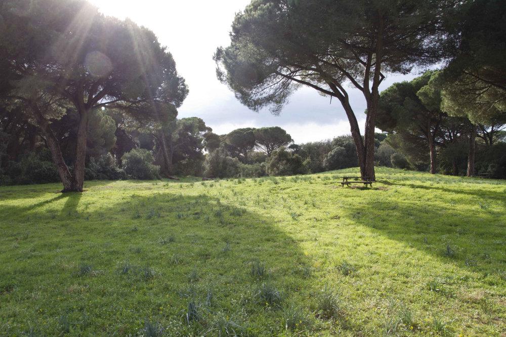 Roman Outskirts Dec 2 2012