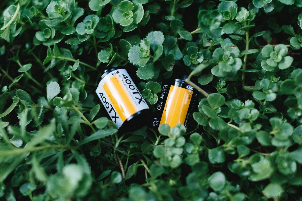 Kodak Tri-X 400  Kodak Ektar 100
