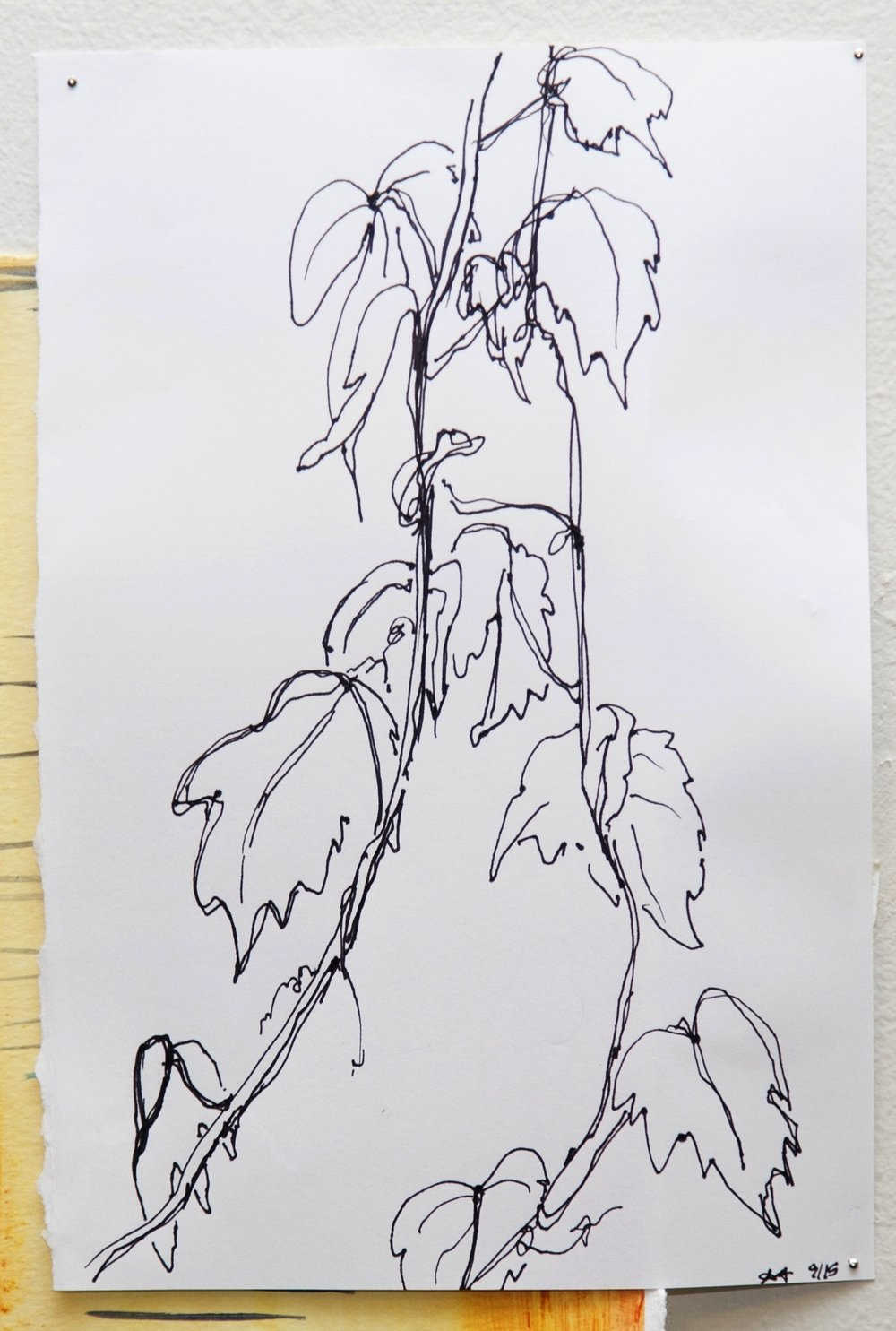 "Gutter Leaves  2015  Pen on paper   4""x8""    photo credit:   Erin Henry"